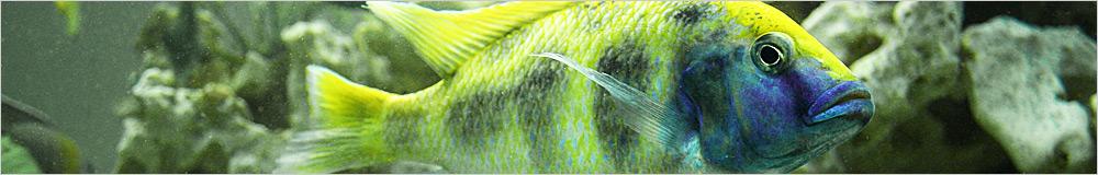 Ontdek ons brede assortiment visvoer voor Discusvissen & cichliden!