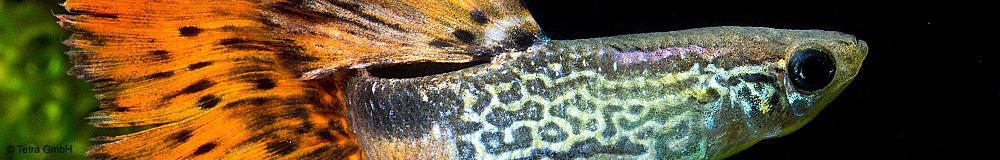 Entdecken Sie unsere Produktvielfalt an Futtersorten für alle Fischarten im Gesellschaftsaquarium!