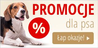 Promocje dla psa