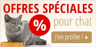 Offres spéciales pour chat