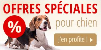 Offres spéciales pour chien