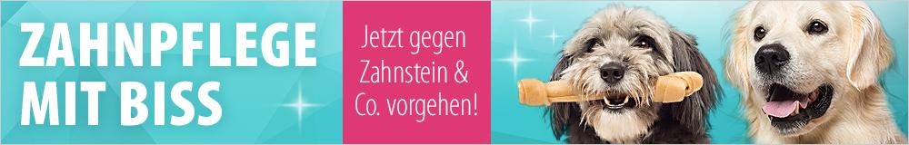 Jetzt gegen Zahnstein & Co. vorgehen!