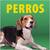 Precios bajos perro