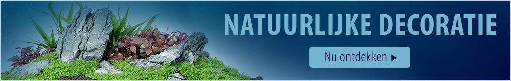 Ontdek onze natuurlijke decoratie!