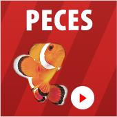 Precios bajos peces