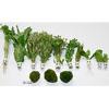 Zooplants Hellgrüne Oase
