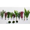 Zooplants Rote Farbkleckse