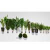 Tetra 30l Gesellschaftsaquarium Pflanzen
