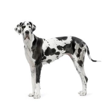 Orijen para perros