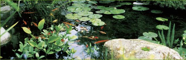 Tetra algenlabor for Gartenteichanlagen bilder