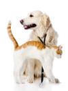 Alimentation thérapeutique pour chien et chat