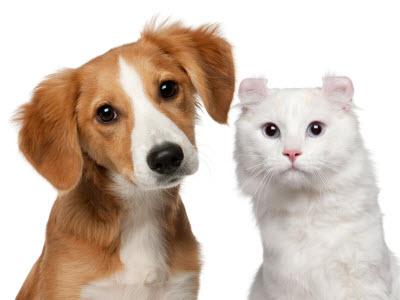 Orijen para perros y gatos