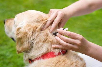 Hund mit Fressnapf