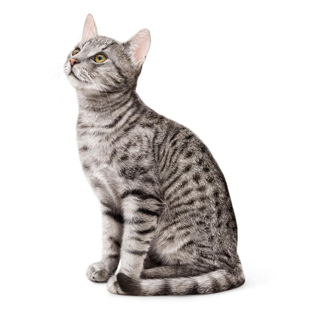 Resultado de imagen de gato pensando