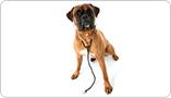 Alimentation thérapeutique pour chien
