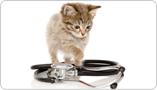 Alimentation thérapeutique pour chat