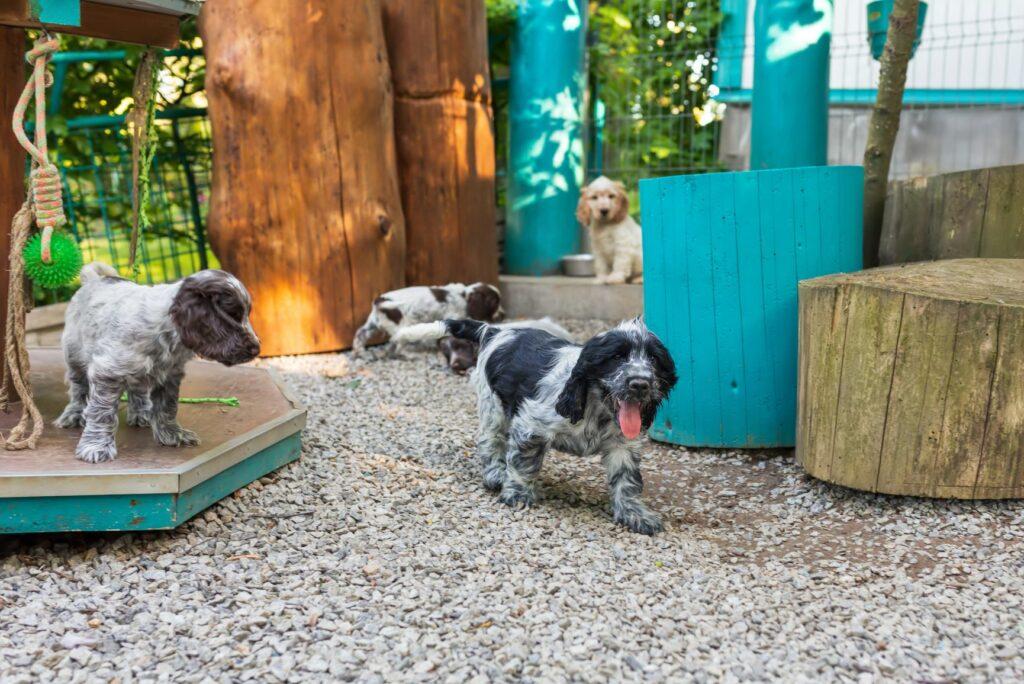 Junge Hunde bei einem Züchter