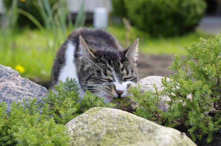 Katze frisst giftige Pflanze