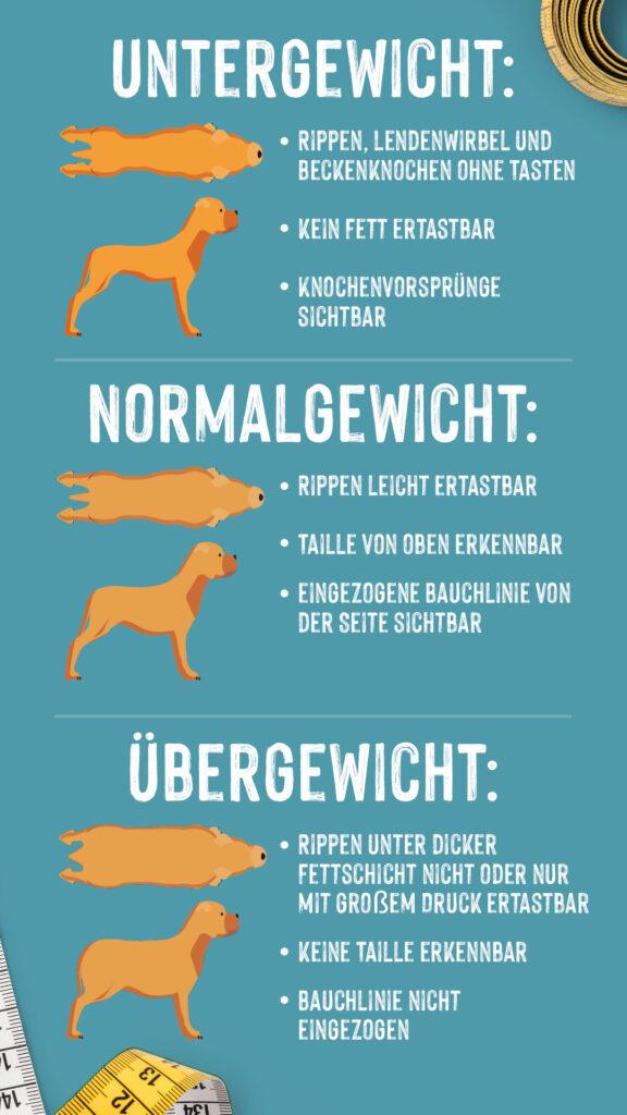 Infografik übergewichtiger Hund erkennen