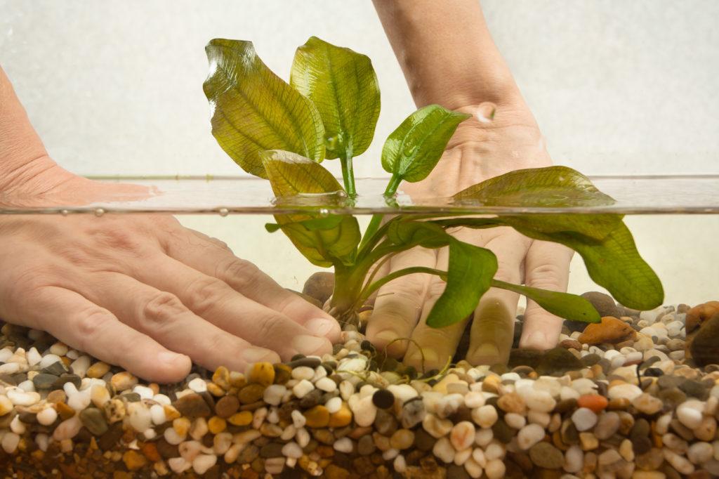 Aquarium Einrichten Das Mussen Sie Bei Der Einrichtung Beachten