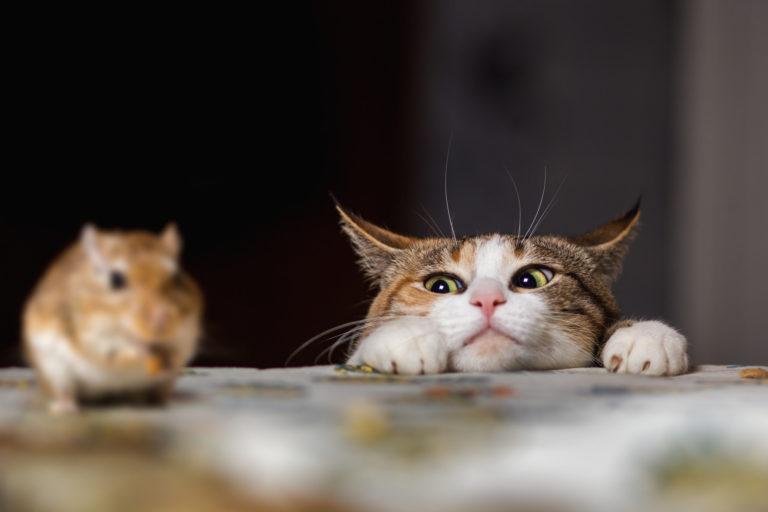 katzen jagen