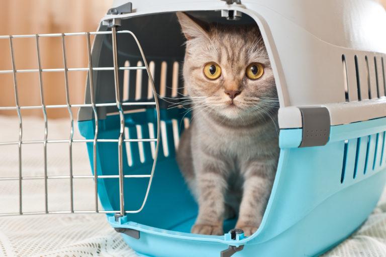 Schifffahrt mit Katze