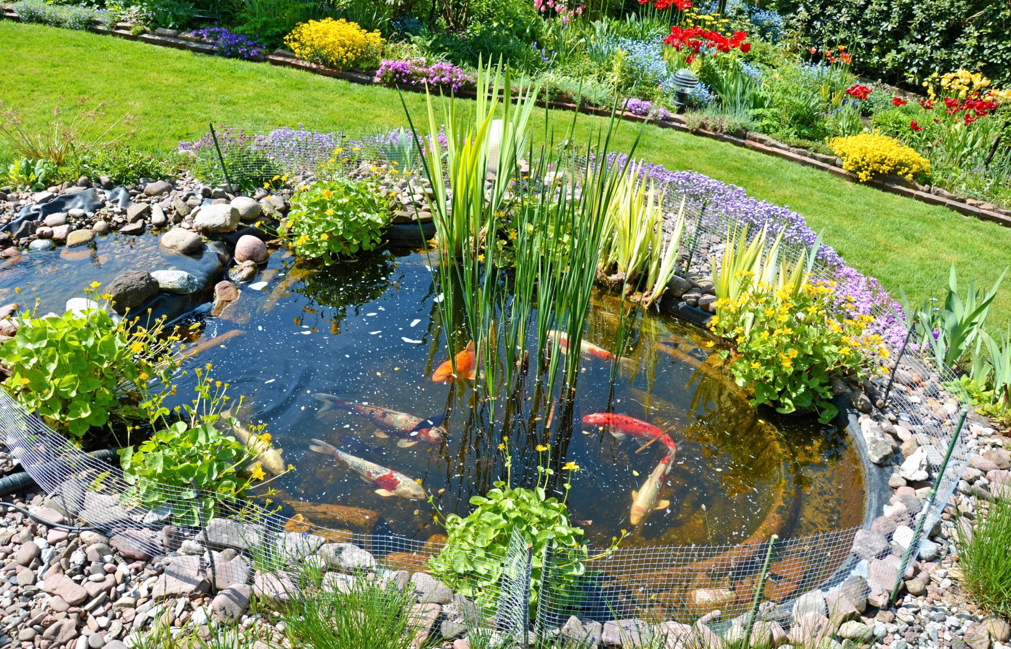 Gartenteich anlegen das m ssen sie beachten zooplus for Gartenteich anlegen fertigteich