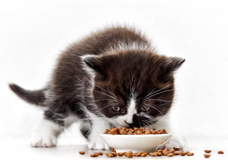 katzenbaby ernährung