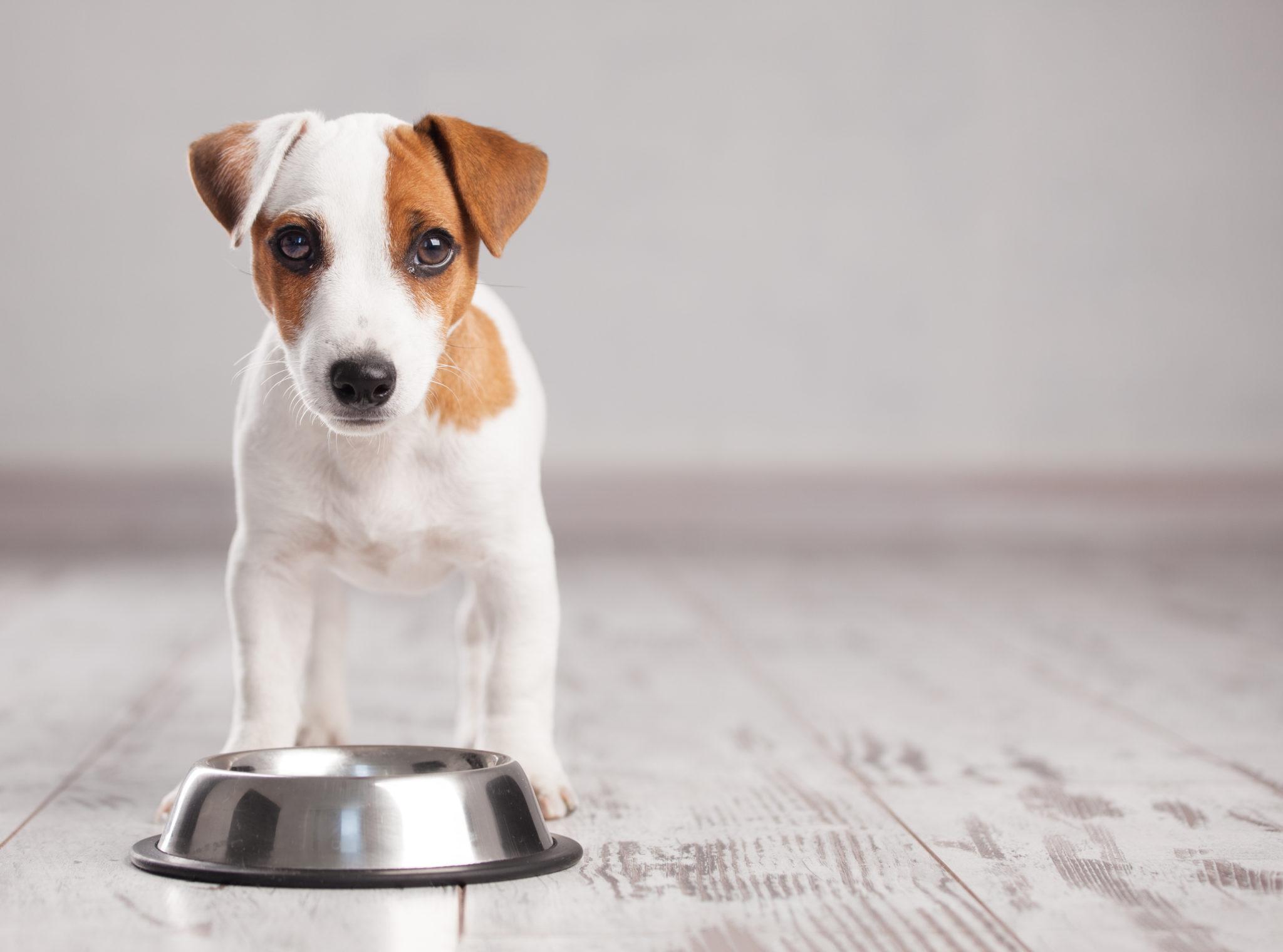 Bulldogge oder Chihuahua Hundenapf mit Name Yorkshire Mops