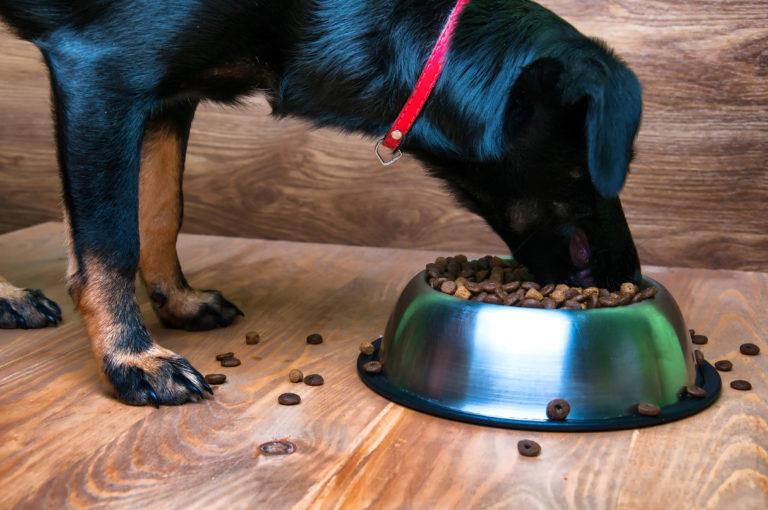 Das richtige Futter für den Hundesenior