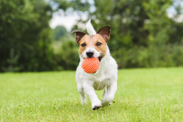 Hund mit Ball im Maul