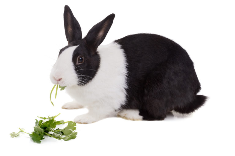 kaninchen verdauung