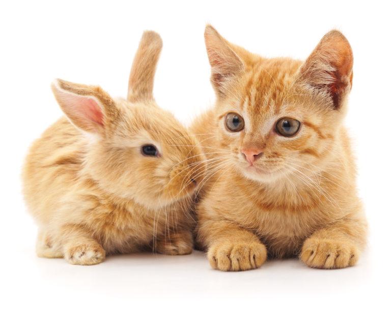 katze und kleintier