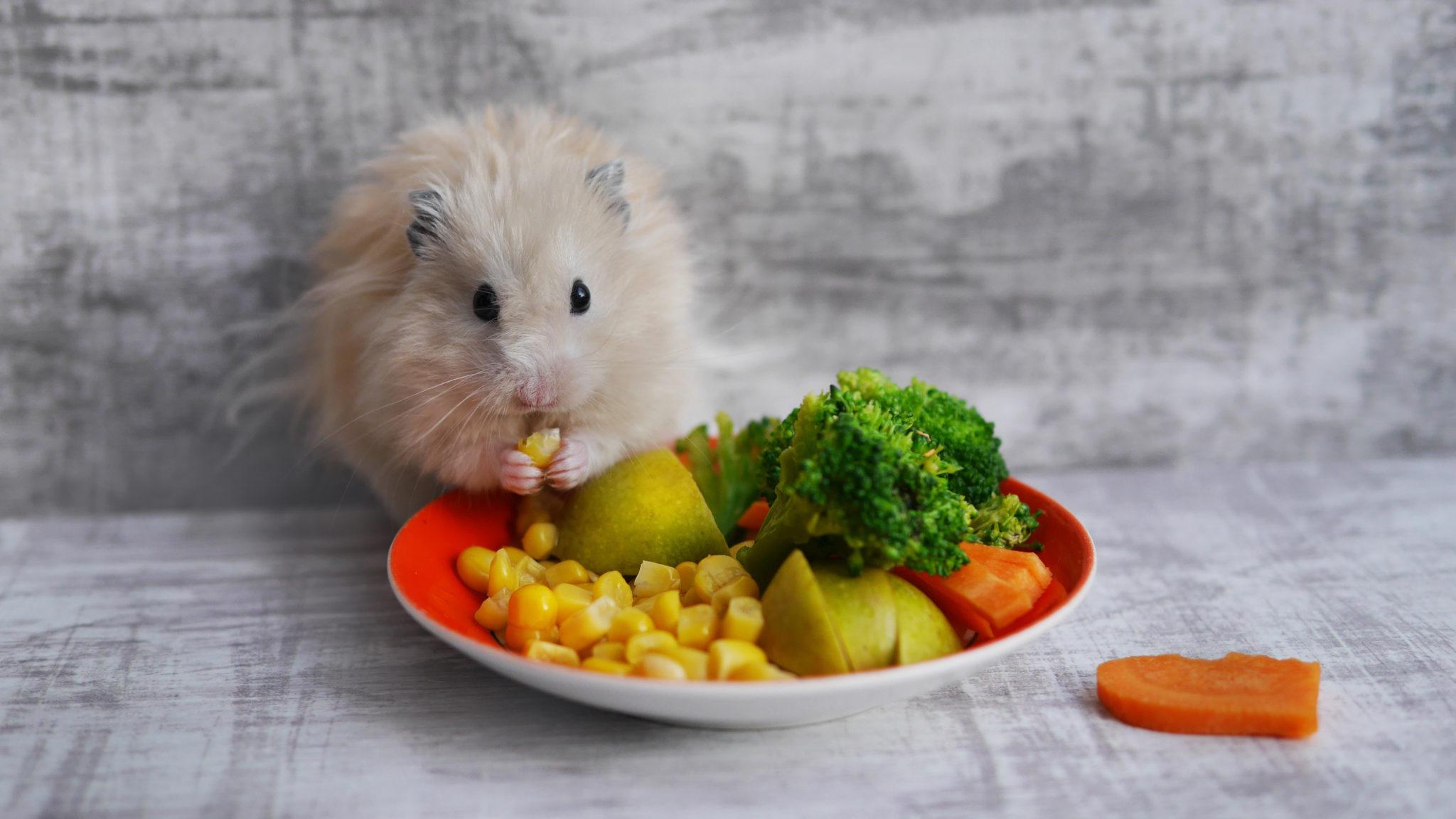 Grünfutter für Kleintiere