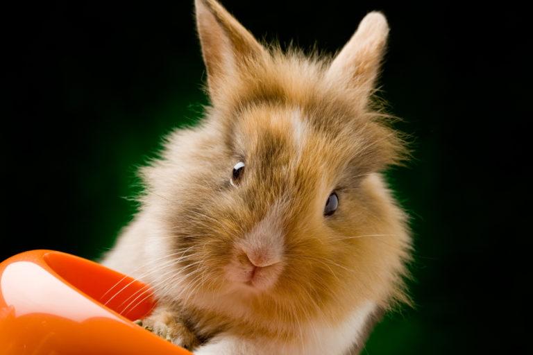 Foder för kaniner