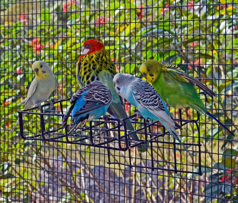 vogelvolières