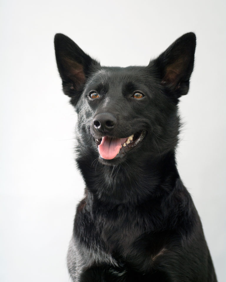 Partnervermittlung hundehalter