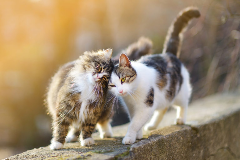 Katzen mit anderen Katzen