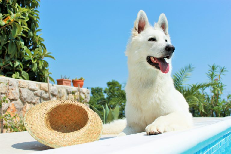 proteggere il cane dal sole
