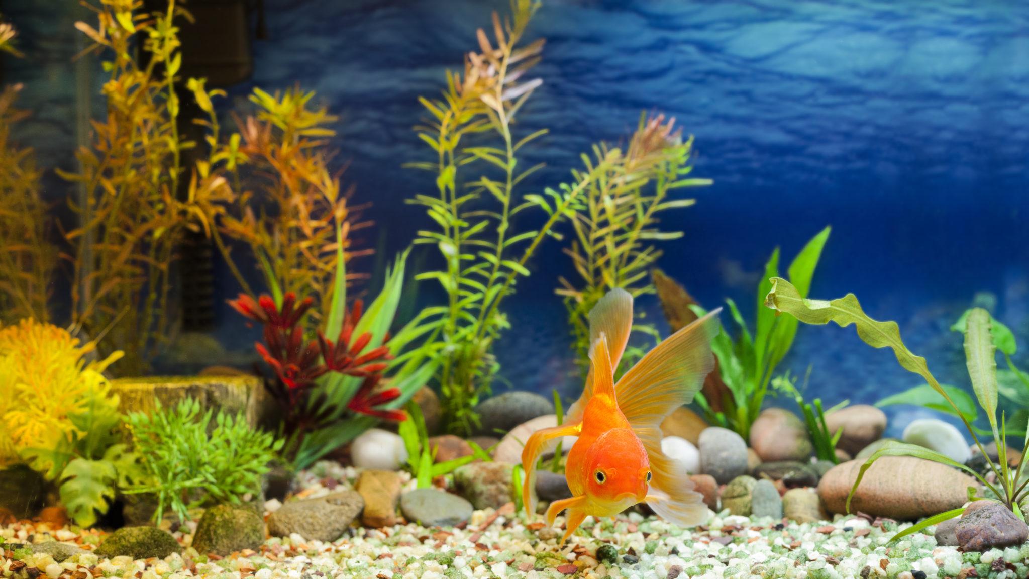 fischkrankheiten im aquarium ursachen symptome und behandlungsm glichkeiten. Black Bedroom Furniture Sets. Home Design Ideas