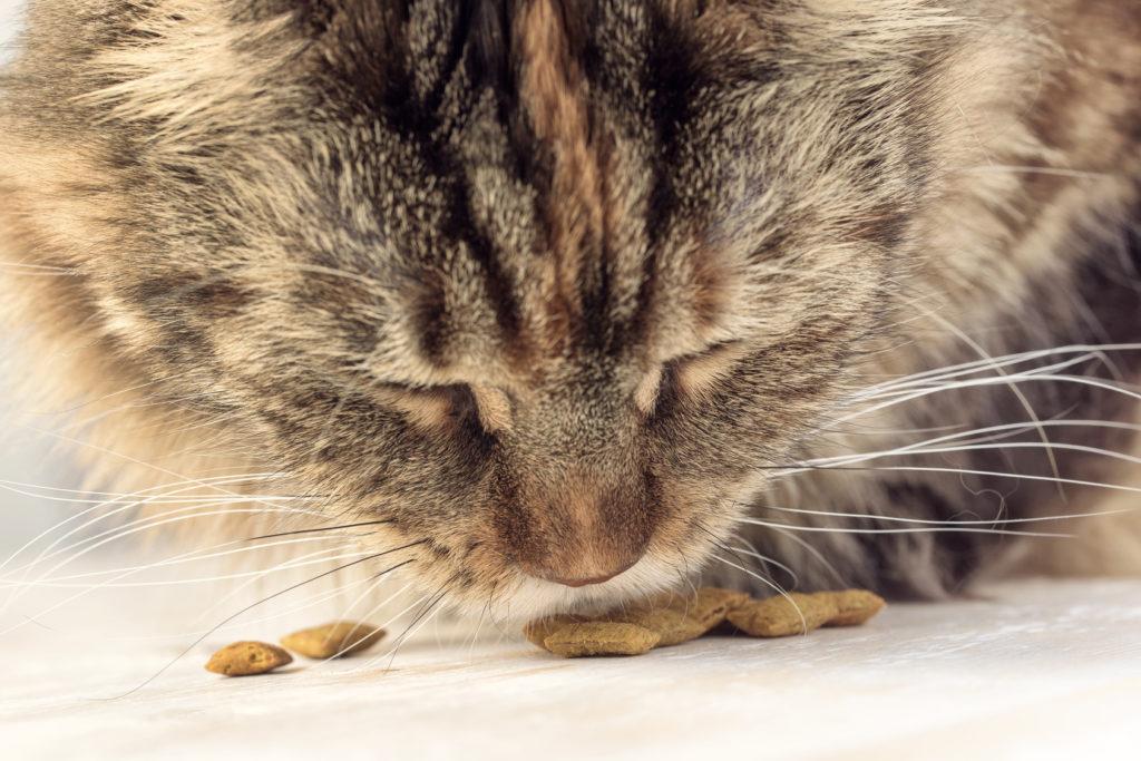 futterunverträglichkeit bei katzen
