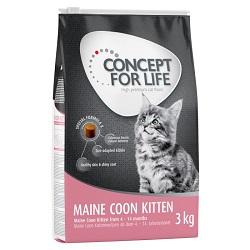 Kitten Maine Coon