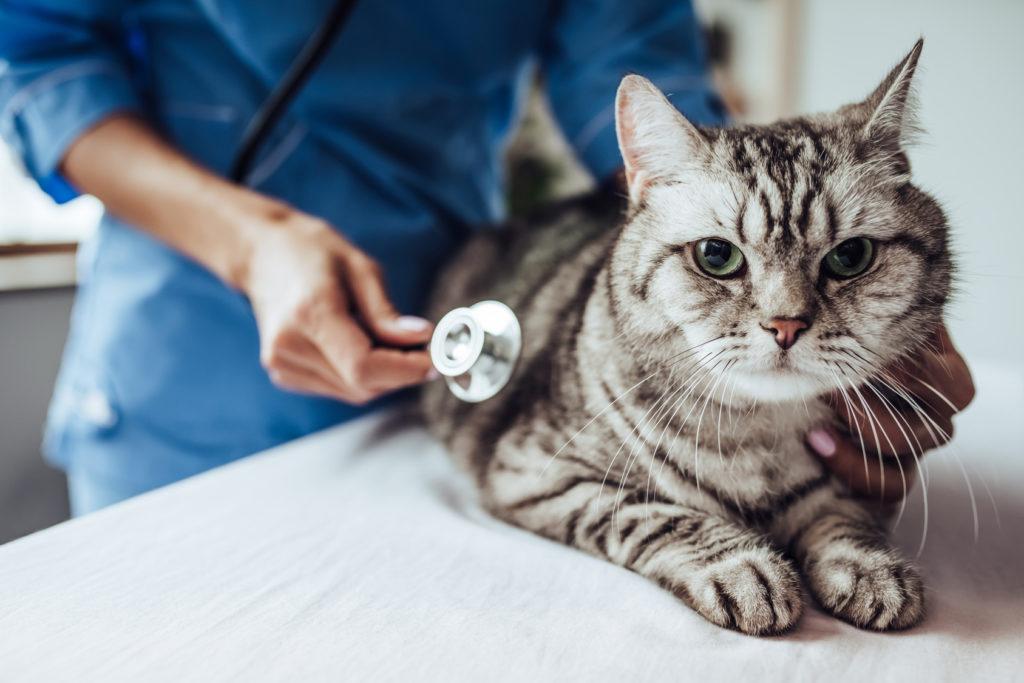 Gehirntumor katze symptome | Erkennen, ob deine Katze