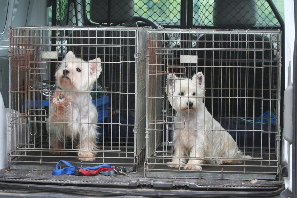 psi u autu