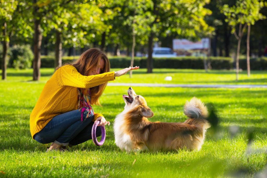 Spelen in een park met je hond