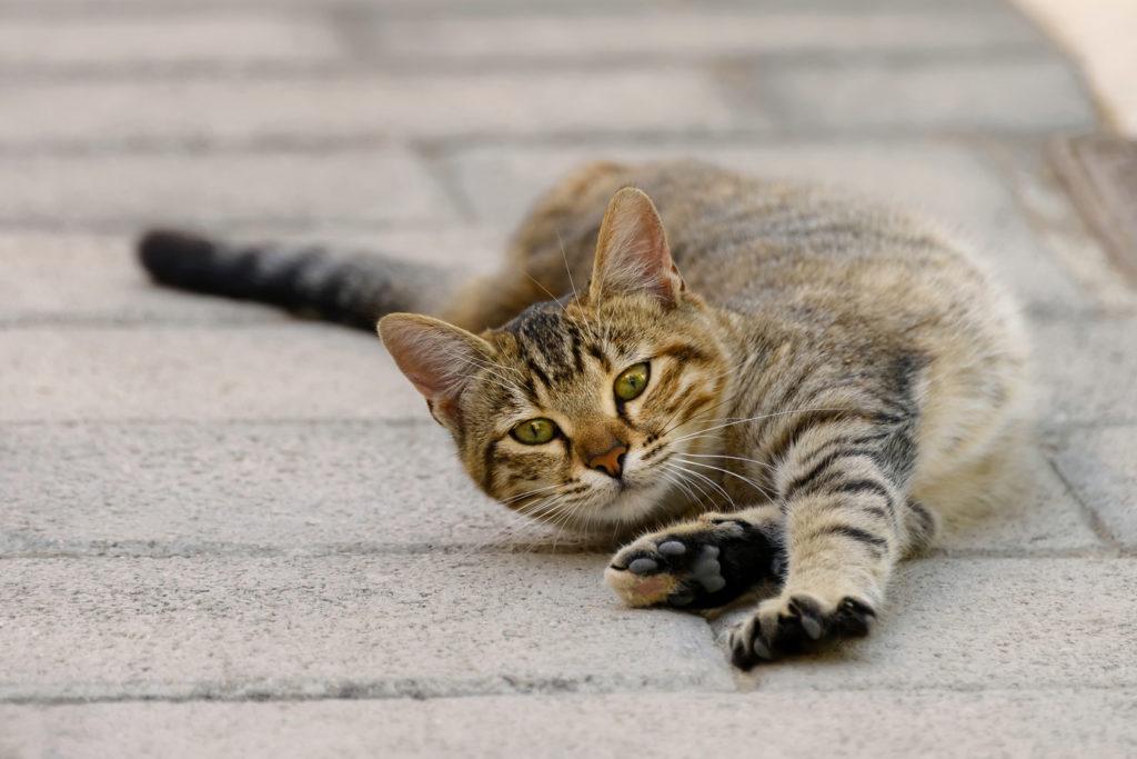 Katze wälzt sich auf dem Boden