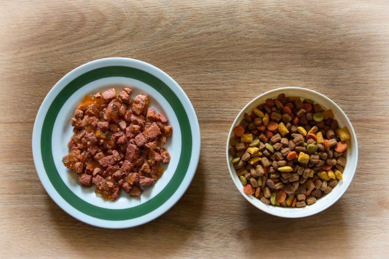 katzen nass oder trockenfutter