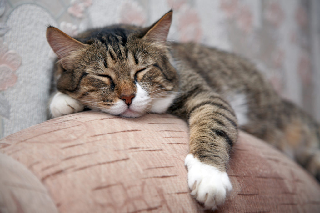 Kat der ligger på en sofa
