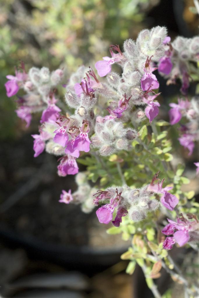 ungiftige pflanzen für katzen