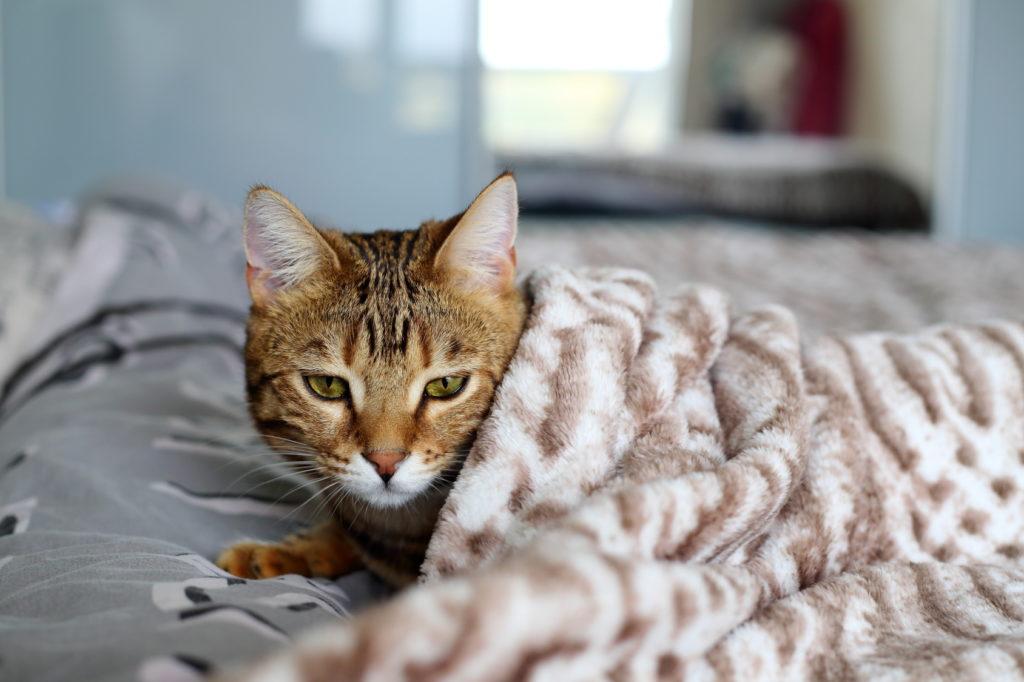 Katze mit Katzenschnupfen im Bett